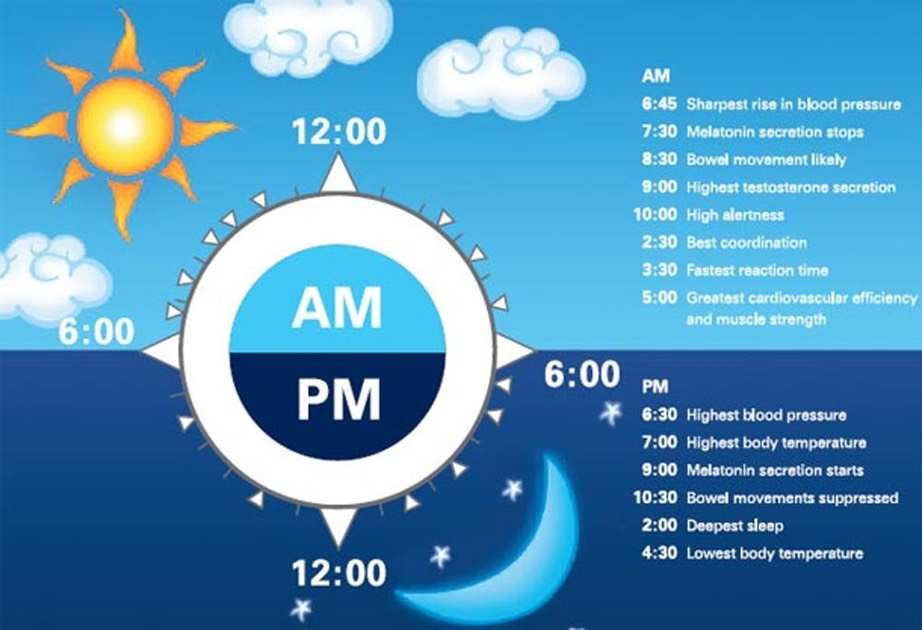 human circadian clock regulates the cycles of many bodily functions. -NIH