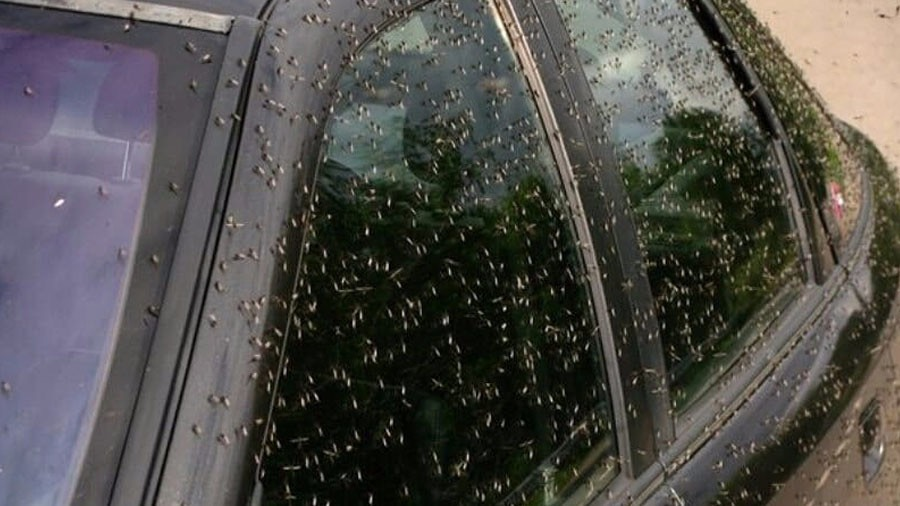 Swarms of mosquitoes terrorize people & kill animals in southwest Russia -Ildusdavydov