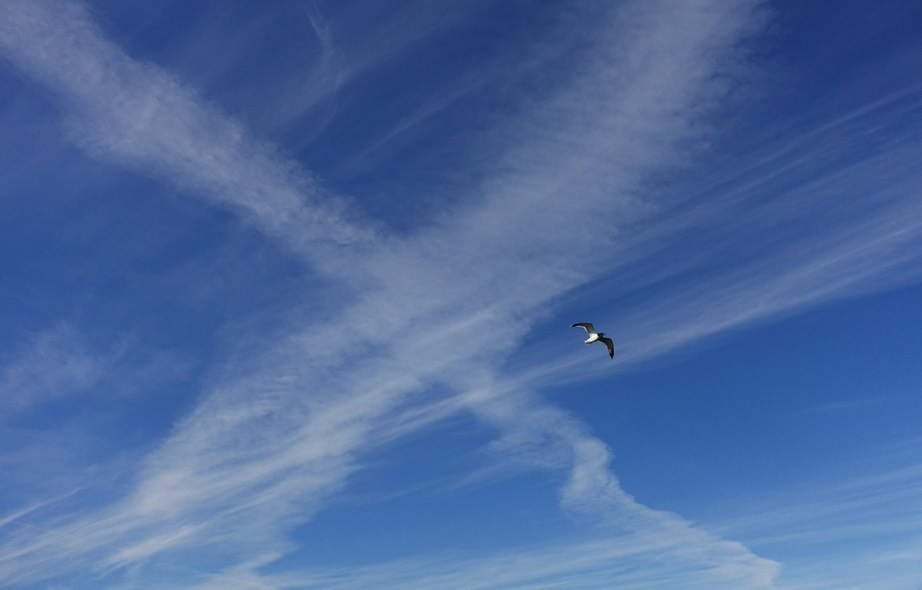 Chemtrails Gull Over Hornby Island Oct. 22, 2018 -Will Thomas photo